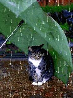 """""""I like rain but not wanna be wet."""" A practical cat under an umbrella."""