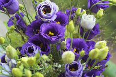 How to Care for a Lisianthus Plant
