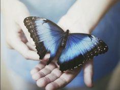 Cuento de la Mariposa Azul