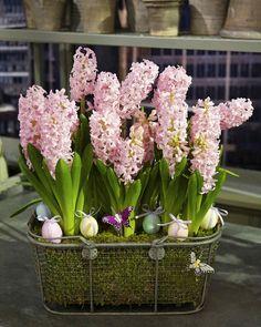 Spring Bulb Arrangement | Martha Stewart Living - Creating a spring bulb arrangement is a beautiful way to make the season come alive indoors.