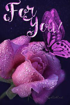 Rose Flower Wallpaper, Butterfly Wallpaper, Love Wallpaper, Beautiful Rose Flowers, Beautiful Butterflies, Good Day Gif, Flowers Black Background, Butterfly Gif, Good Morning Roses