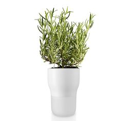 Eva Solo Chalk White Frosted Glass and Ceramic Self Watering Pot - Trouva Herb Garden Planter, Planter Pots, Small Plants, Indoor Plants, Self Watering Pots, Herb Pots, Plant Drawing, Frisk, Frosted Glass