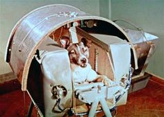Laika, the first dog in space, has her capsule built around her. No provisions were made for her return, and she died in orbit. [1957]