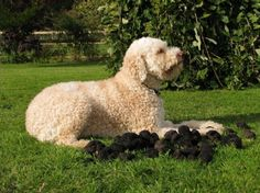 Somerset England, England Uk, Truffle Hunting, Travel Companies, Truffles, Mushroom, Trips, Dogs, Animals
