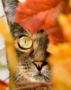 Cat Blending so Well With the Autumn Colors.