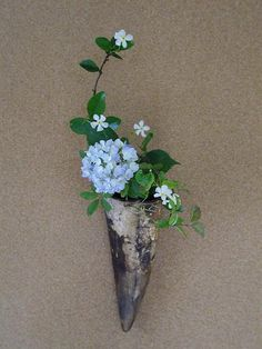 Kakebana- Hydrangea and Teika vine Ikebana Flower Arrangement, Floral Arrangements, Plant Fungus, Flower Installation, Japanese Flowers, Bonsai Plants, Arte Floral, Flower Show, Flower Pictures