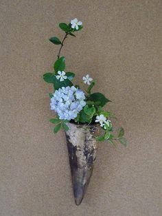 相性 //アジサイに似合う花、テイカカズラ(定家蔓)。花弁の質感が似ている。