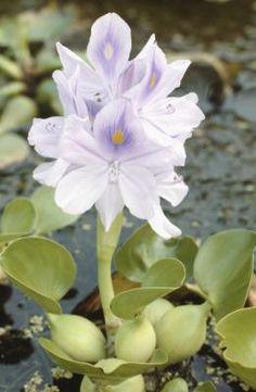 Cómo cultivar flores de bulbos en agua en invierno | eHow en Español