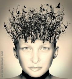 Ideas sprout like eager forests from a well tended mind....   By Claire Sanders