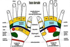 Schéma de réflexologie palmaire du dos de la main