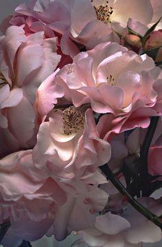 Rose - Nick Knight (2008), details