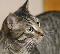 Little Ben came into the shelter with his brother Jerry.  Ben is just about the sweetest, friendliest little guy you could meet.  He loves everyone and loved having his picture taken.  We can see why, he is very handsome, don't you think?  Ben wants...