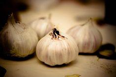 A pesar de tener un olor un tanto desagradable para muchas personas, el ajo puede proporcionar una gran cantidad de beneficios a nuestro organismo, además es una hortaliza que es utilizada en todas las cocinas para darle buen sabor a las comidas. El sabor del ajo es bastante fuerte y un poco picante, el olor …