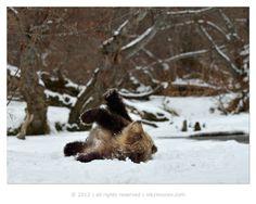 Counting snowflakes  by Nikolai Zinoviev, via 500px