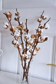 2 X Organic dried cotton stems 2 Cotton branches Cotton Cotton Stalks, Cotton Plant, Indoor Cactus, Dry Plants, Branch Decor, How To Preserve Flowers, Plant Decor, Dried Flowers, Planting Flowers