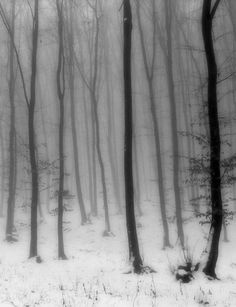 Into the woods... dark fairytale forest, ghostly trees, concept inspiration