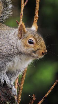 Eastern Gray Squirrel, Kangaroo, Grey, Photography, Animals, Baby Bjorn, Gray, Photograph, Animales