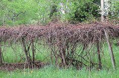 Emosionele Welstand: Snoei bring lewe Bring It On, Plants, Plant, Planets
