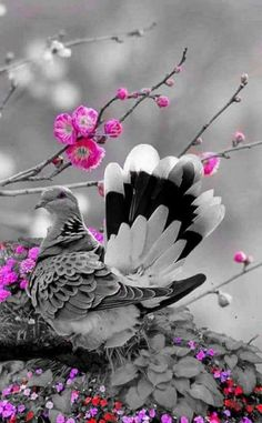 Life comes black and white, You are the one who puts color Splash Photography, Cute Photography, Nature Photography, Black And White Colour, Black And White Pictures, Nature Pictures, Beautiful Pictures, Color Splash Photo, Best Profile Pictures