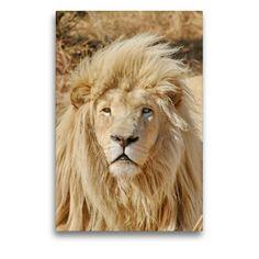 Artworks, Lion, Portraits, Wall Art, Animals, Color, Calendar, Canvas, Pictures