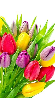 Colorful tulips - live wallpapers with the most well-kown blossoms in the world. Tulips are very pretty, easy and dandified at the same time. increase exclusive light and soleness to the screen of you Beautiful Flowers Garden, Beautiful Flower Arrangements, Exotic Flowers, Amazing Flowers, Beautiful Roses, Pretty Flowers, Easter Flowers, Tulips Flowers, Spring Flowers