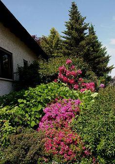 Viele Farben im Vorgarten. :-)