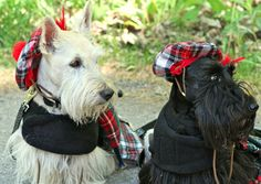 1000 Images About Scottie Dogs On Pinterest Scottie