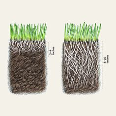 The Case for Organic—at a Glance | Everything You Need to Know to Grow a Lush Lawn | This Old House Mobile