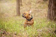 130e855827d3a5 Obroża dla psa tropikalna z Mysmo, regulowana, zaprojektowana przez nas, w  wyniku wielu
