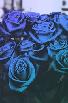 Ideas For Wallpaper Flores Azuis Beautiful Roses, Blue Flowers, Red Roses, Beautiful Flowers, Pretty Roses, Trendy Wallpaper, Blue Wallpapers, Vintage Wallpaper, Blue Roses Wallpaper