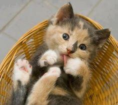 Kitten. Basket case :-)