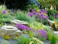Planting rock garden plants is a great way to spruce up one's surroundings. Rock garden plants thrive in well-drained soil, are drought tolerant. Rockery Garden, Rock Garden Plants, Backyard Garden Landscape, Xeriscaping, Sloped Garden, Garden Grass, Green Garden, Ideas Para Decorar Jardines, Small Yard Landscaping
