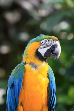 Animals in Deshaies, Guadeloupe - a photo by d-jack Toucan, Parrots, Pet Birds, Creatures, Animals, Community, Color, Animales, Animaux