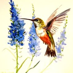 Hummingbird original watercolor painting 12 X 12 by ORIGINALONLY, $38.00
