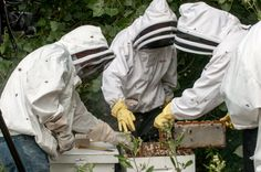 Beekeeping offers former prisoners in Chicago transitional jobs as they re-enter the workforce.