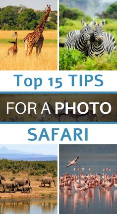 A few years ago, we had the opportunity to go on safari for ten days in Tanzania. Passionate about photography and travel, we offer you the best photography tips to take great pictures during your safari. Photography Basics, Photography Courses, Amazing Photography, Travel Photography, Learn Photography, Best Cameras For Travel, Travel Photos, Safari Photo, Technique Photo