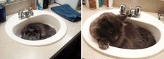 15 Amazing Before and After Pictures of Cats That Will Make Your Day