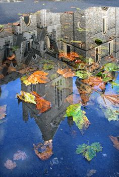 Autumn Reflection -   St Patrick's Cathedral, Dublin, reflected in a churchyard puddle.  ( by simon_bull )
