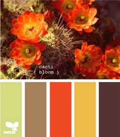 Cacti Bloom - love that dark, rich brown maybe for the background of a duvet with all the other colors mixed in.