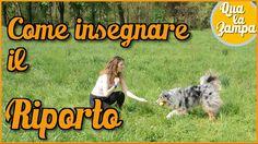 Addestramento/Educazione cani n°17 - Come insegnare il RIPORTO   Qua la ...