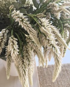 816 vind-ik-leuks, 4 reacties - Yöli & Otis (@yoli_and_otis) op Instagram: 'The best bouquets @flowersatthefarm #yoliandotishq'