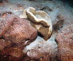 Evolution: Rock sponges split up