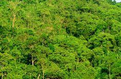 """""""โครงการปลูกป่าวังจันทร์"""" เพิ่มพื้นที่สีเขียว แก่ประเทศไทย - PR INFORMATIVENESS"""