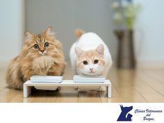 TIPS PARA MASCOTAS: Mi gato come muy rápido. CLÍNICA VETERINARIA DEL B...
