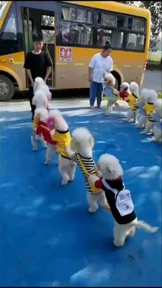 Cute Funny Baby Videos, Cute Funny Dogs, Funny Dog Videos, Cute Funny Animals, Cute Cats, Adorable Dogs, Baby Animals Super Cute, Cute Baby Dogs, Cute Wild Animals