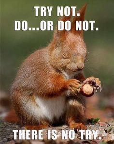 Jedi squirrel!