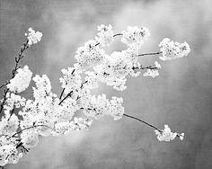 Grey Photograph light black and white floral by CarolynCochrane, $30.00