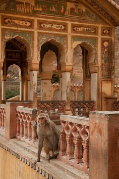 The Monkey Temple ~ Jaipur, Rajasthan, India Goa India, North India, Angkor, Bhutan, Nepal, Temples, Places To Travel, Places To Visit, Taj Mahal