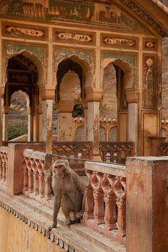 The Monkey Temple! Jaipur, India