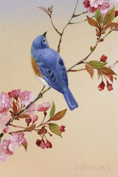 Blue Bird on Cherry Blossom Branch Pancarte matière plastique